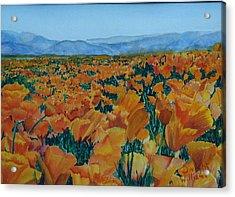 California Poppies Acrylic Print by Dwight Williams
