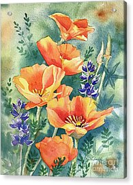 California Poppies In Bloom Acrylic Print