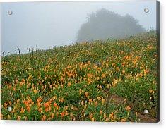 California Poppies On Volcan Mountain Acrylic Print