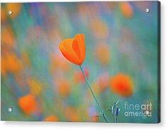 Spring Poppy Acrylic Print by Anthony Bonafede