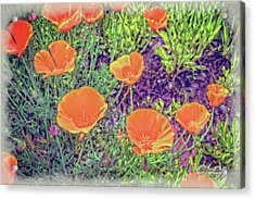 Acrylic Print featuring the photograph California Poppys Too by William Havle