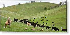 California Ranching Acrylic Print