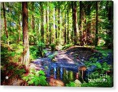 California Redwood Forest Wetlands Ap Acrylic Print by Dan Carmichael