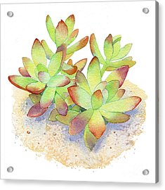California Sunset Succulent Acrylic Print