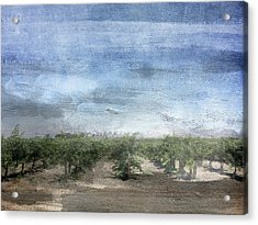 California Vineyard- Art By Linda Woods Acrylic Print