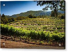 California Vineyard Acrylic Print by Robert Davis