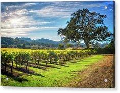 California Wine County - Sonoma Vineyard And Lone Oak Tree Acrylic Print by Jennifer Rondinelli Reilly - Fine Art Photography