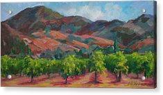 Calistoga Vineyards  Acrylic Print by Deirdre Shibano