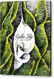 Call Lily  Acrylic Print by C F Legette