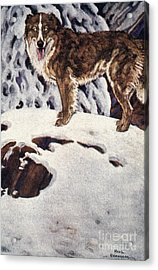 Call Of The Wild, 1903 Acrylic Print by Granger