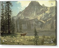 Call Of The Wild Acrylic Print by Albert Bierstadt