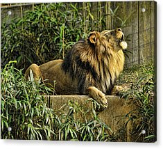 Call Of The Wild Acrylic Print by Keith Lovejoy