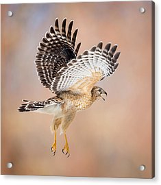 Acrylic Print featuring the photograph Call Of The Wild Square by Bill Wakeley