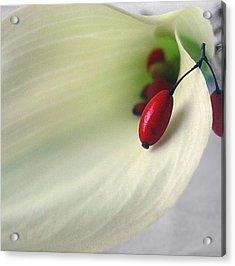Calla Berries Acrylic Print by Brenda Leitow