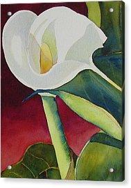 Calla I Acrylic Print by Judy Mercer