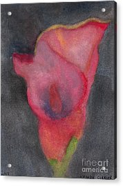 Calla Lily Acrylic Print by Amanda Currier