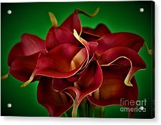 Calla Lily Bouquet Acrylic Print by Ray Shrewsberry