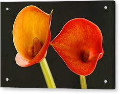 Calla Lily Acrylic Print by Dennis Hammer