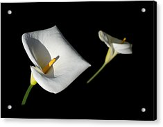 Acrylic Print featuring the photograph Calla Lily by Jon Exley