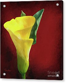 Calla Lily - Yellow Acrylic Print by Shirley Stalter