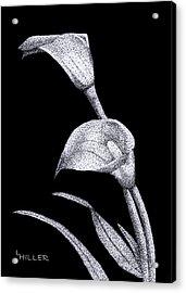 Calla Acrylic Print