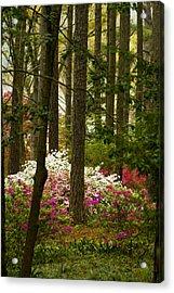 Callaway Gardens Spring Azaleas Acrylic Print by Kathy Clark