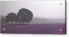 Calm Autumn Mist Acrylic Print