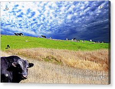 Calm Before The Storm Acrylic Print by Wingsdomain Art and Photography