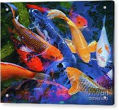 Calm Koi Fish Acrylic Print