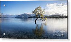 Acrylic Print featuring the photograph Calm Morning by Scott Kemper
