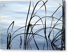 Calming Acrylic Print by Evelyn Patrick