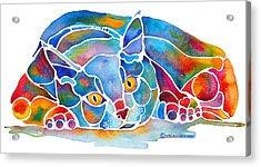 Calypso Cat Acrylic Print by Jo Lynch