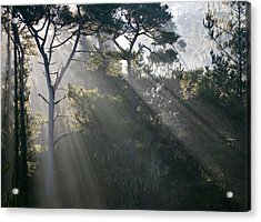 Cambria Pines Acrylic Print by Greg Iger