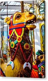 Camel Carrousel Ride Acrylic Print by Garry Gay