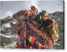 Camel Acrylic Print by Joana Kruse