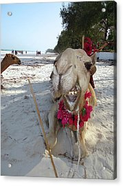 Camel On Beach Kenya Wedding2 Acrylic Print