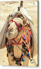Acrylic Print featuring the photograph Camel by Silvia Bruno