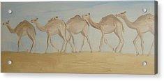 Camel Train Acrylic Print by Wendy Peat