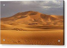 Acrylic Print featuring the photograph Camel Trek by Ramona Johnston