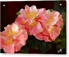 Acrylic Print featuring the painting Camellias 1cmods1b Digital Painting Gulf Coast Florida by G Linsenmayer
