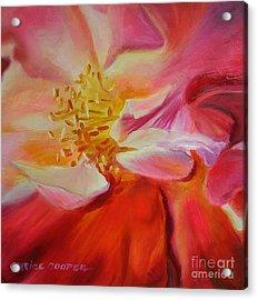 Camellia's Blush Acrylic Print