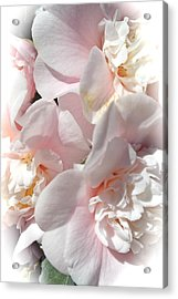 Camellias Softly Acrylic Print