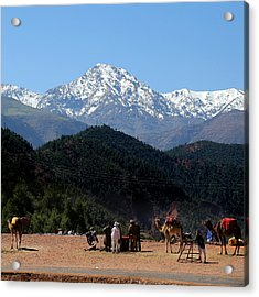 Acrylic Print featuring the photograph Camels 1 by Andrew Fare