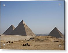 Camels At The Great Pyramids At Giza Acrylic Print by Taylor S. Kennedy