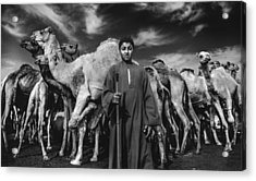 Camels Gaurdian Acrylic Print by Mohamed Safwat Abonour