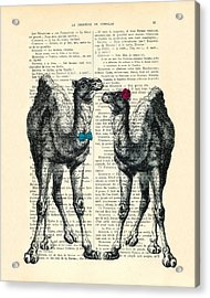 Camels Married Couple Acrylic Print
