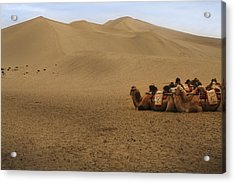 Camels Of The Silk Route Acrylic Print