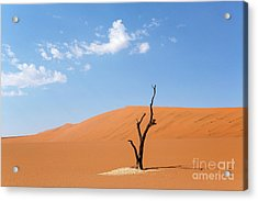 Camelthorn Tree In Sossusvlei, Namibia Acrylic Print by Julia Hiebaum
