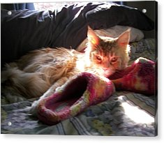 Acrylic Print featuring the photograph Cameo And Sunbeams by Judy Via-Wolff