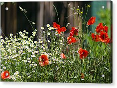 Camille And Poppies Acrylic Print